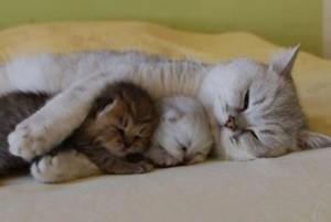 madre-gata-gatitos