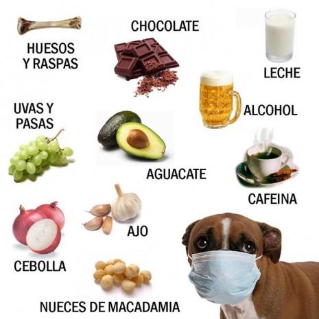 mascotas perros311268_10151165877537696_548801559_n