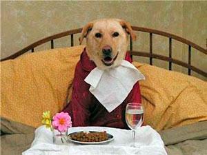 perro-comiendo