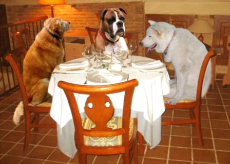 perroConsejos-de-alimentacion-para-perros