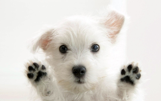Cachorro en pantalla