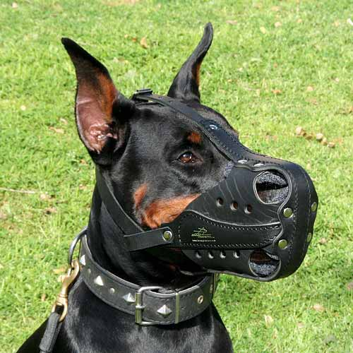 Doberman-leather-muzzle-for-agitation-training_LRG