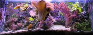 acuario_marino_de_coral_blando