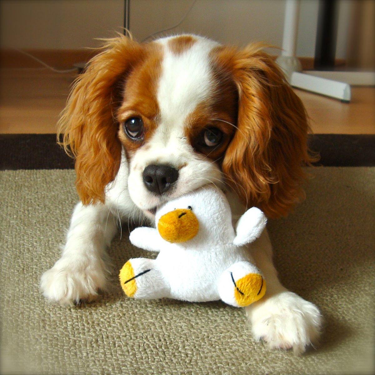 cachorrosonsejos-correcta-socializacion-cachorro