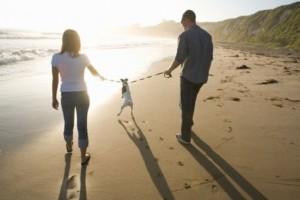 consejos-en-beneficio-de-la-mascota-en-caso-de-divorcio_qd2bj