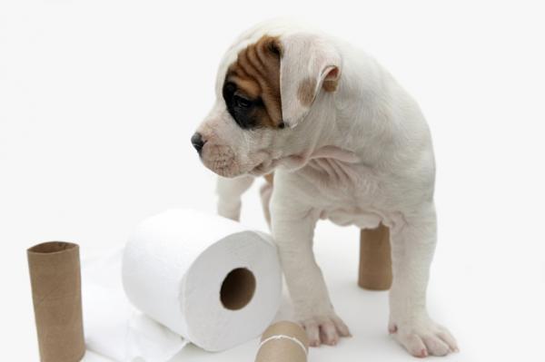 mascota90573-600x399-puppy_toilet_paper