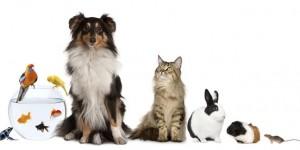 mascotas-animales-getty_MUJIMA20120827_0015_32