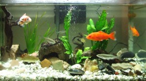 peces-acuario