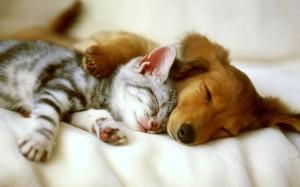 perro-y-gato-amigos1