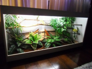 terrario-iguana-jiboia-corn-snake-teiu-tartarugas-13976-MLB3354263297_112012-F