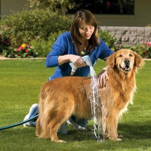 Con-qué-frecuencia-se-debe-bañar-al-perro