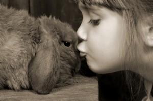 Conejo-enano-como-mascota1