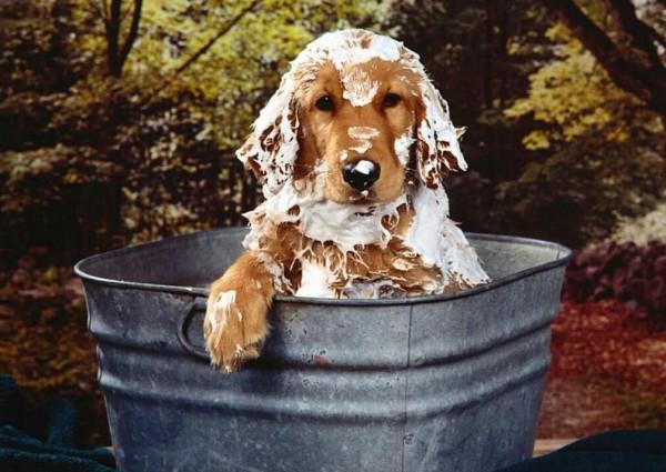 Perro-bañandose