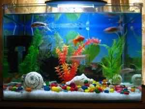acuario-de-peces-tropicales