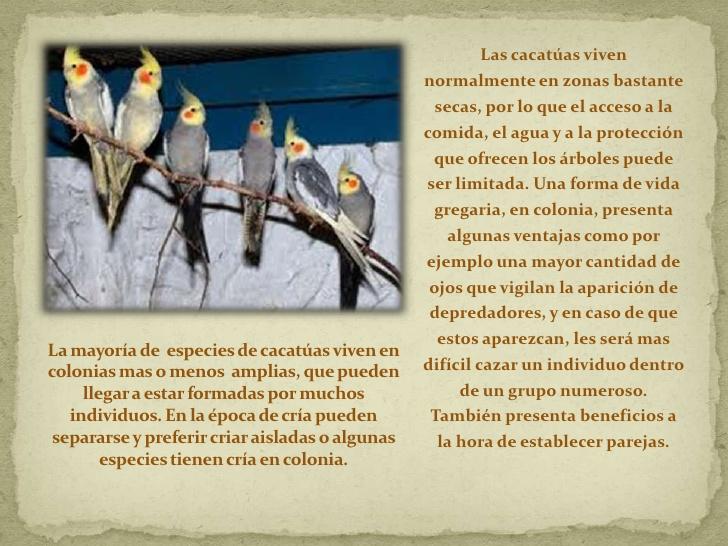 cacatuas-3-728