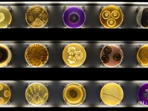 NETHERLANDS-SCIENCE-MICROBIOLOGY-MUSEUM-ZOOLOGY
