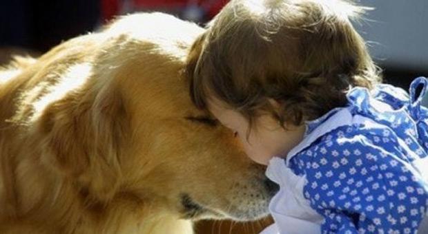 los-perros-ayudan-a-aliviarlo-el-dolor-de-los-humanos