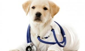 los-perros-pueden-detectar-enfermedades-en-las-personas-