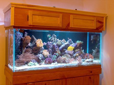 Cu les son los beneficios de tener peces como mascotas for Oxigeno de peceras