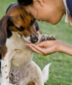 tener-un-perro-bien-educado
