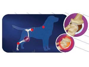 OsteoartritisEnPerros
