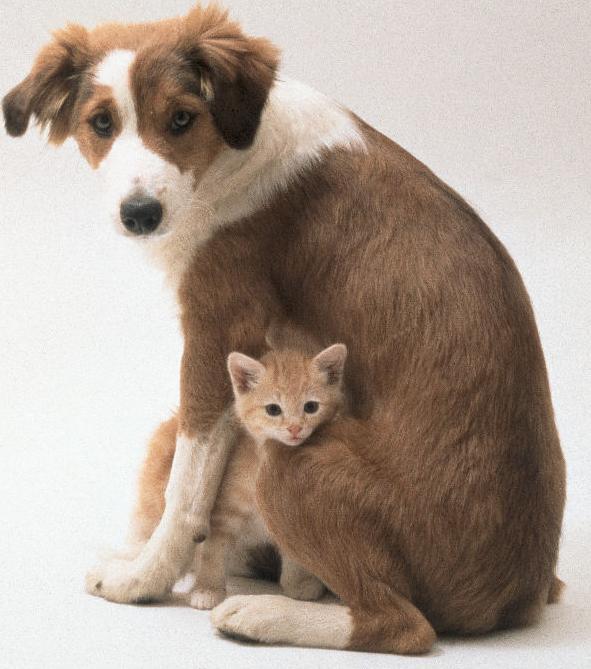 Protectora-de-animales