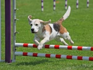 agility-perros-barcelona