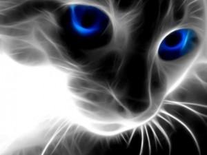 cat-magic01