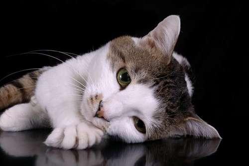 gato-depresivo