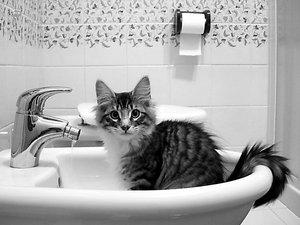 gato-en-el-lavabo2