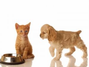 gato_y_perro_comiendo-normal