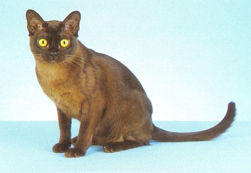 gatoburmes