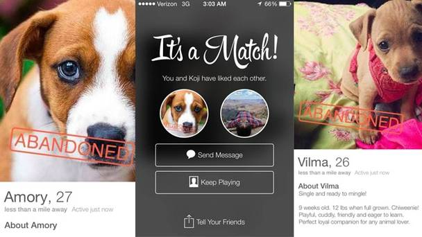 tinder-dogs-hed2-2014