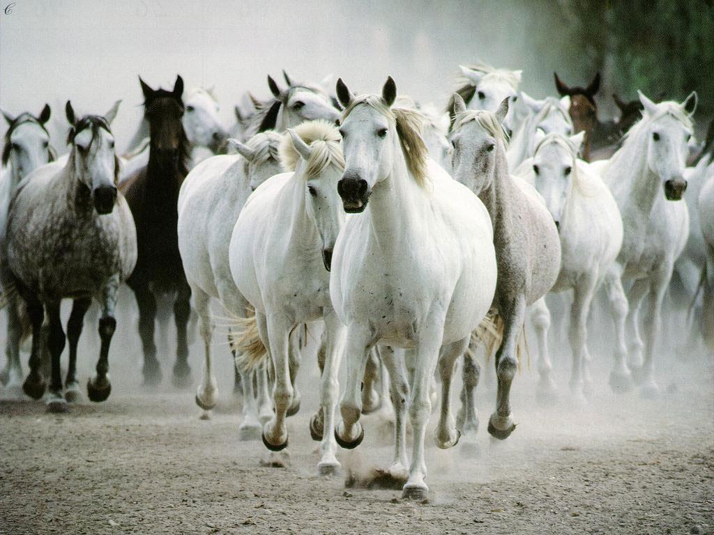 tropilla-de-caballos