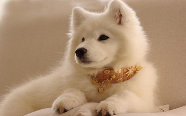 Collares-para-perro-originales