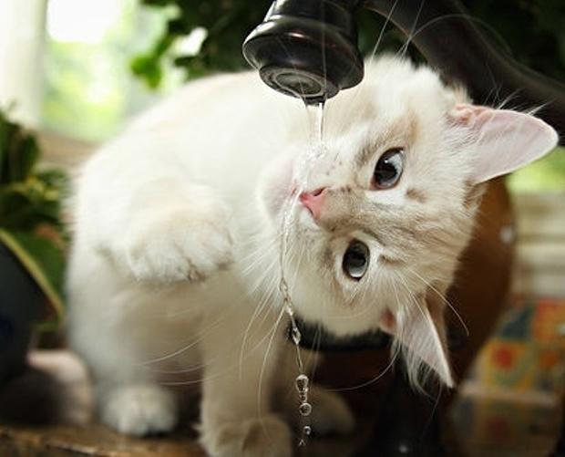 Consejos-para-pasar-un-verano-agradable-con-tu-gato-Feliway