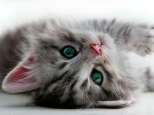 GatoTranquilo