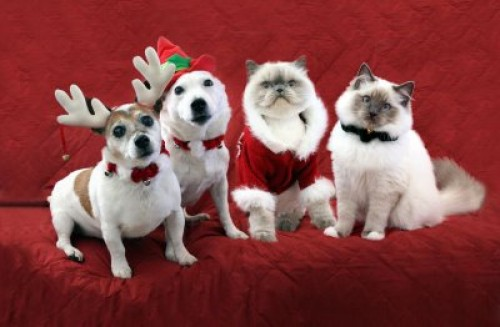 animales-navideños-e1356204832766