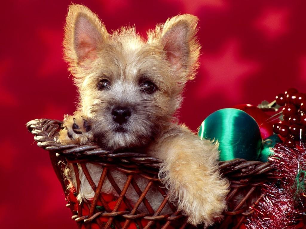 animfondo-pantala-perro-navidad-source_wdp