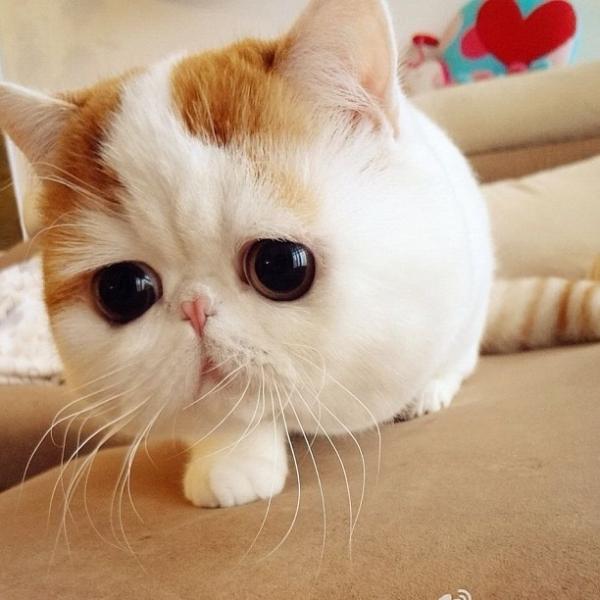 exoticoConoce al gato más divino y con más seguidores del mundo
