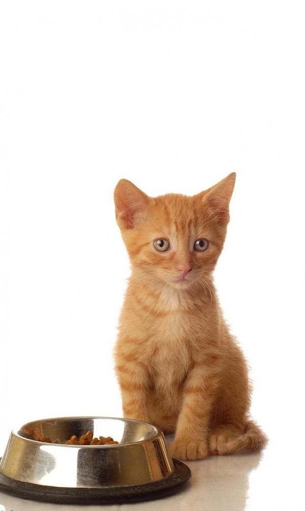 gato-y-perro-comiendo