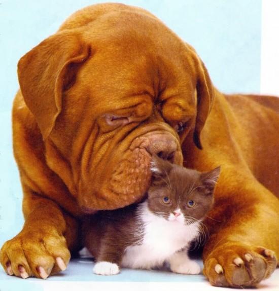 gato y perro0003