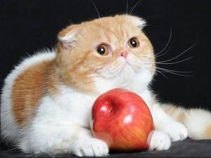 gatoFoldex