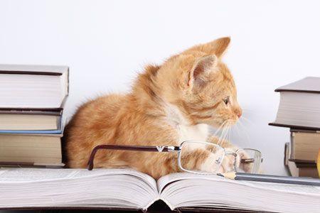 la-inteligencia-de-los-gatos