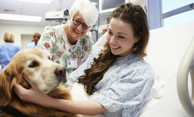 los-perros-pueden-detectar-enfermedades-en-las-personas-4
