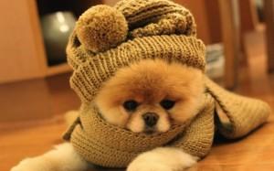 perro-frio