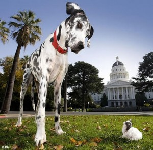 perro-grande-chico-envidiosos