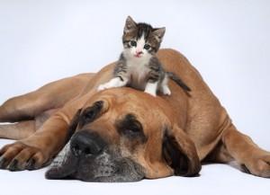 perro-y-gato-articulo-relaciones-humanos