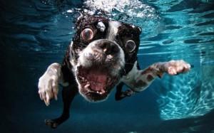 perros-bajo-el-agua-01
