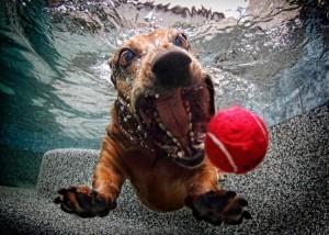 perros-bajo-el-agua-02